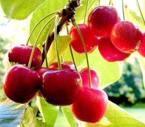 Health Benefits of Cherries