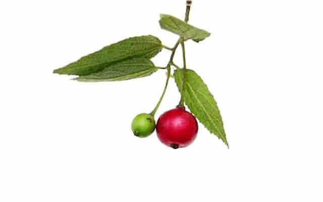 Aratilisfruit