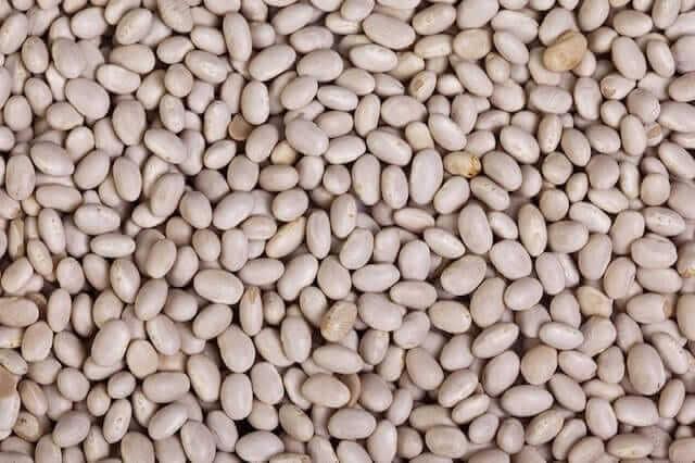 Navy Bean