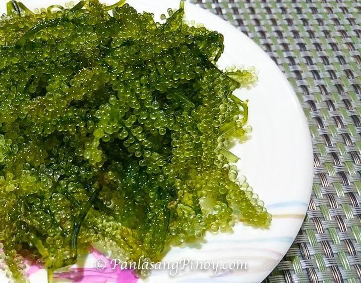 Lato Seaweed