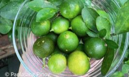 calamansi sour fruit
